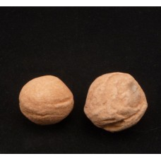 Fossil nuts